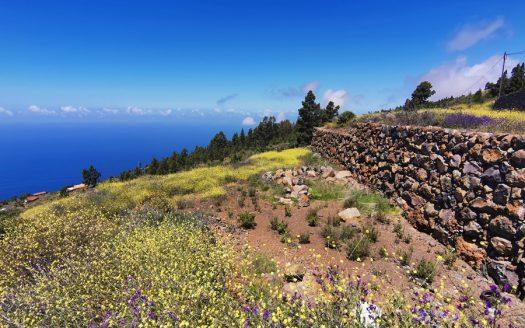 Tinizara Tijarafe La Palma